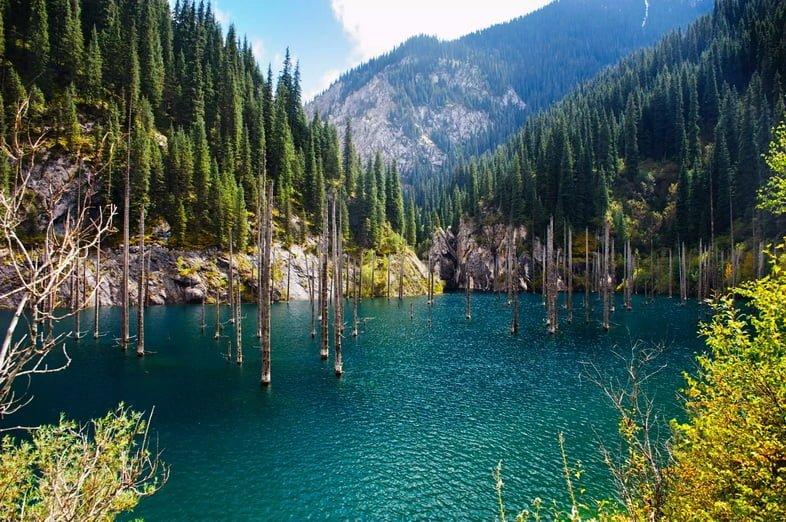 Высокие тонкие деревья, выходящие из бирюзовой воды горного озера.