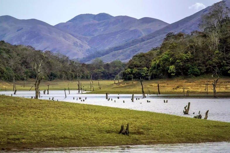 Мертвые пни деревьев, выходящие из озера возле горы.