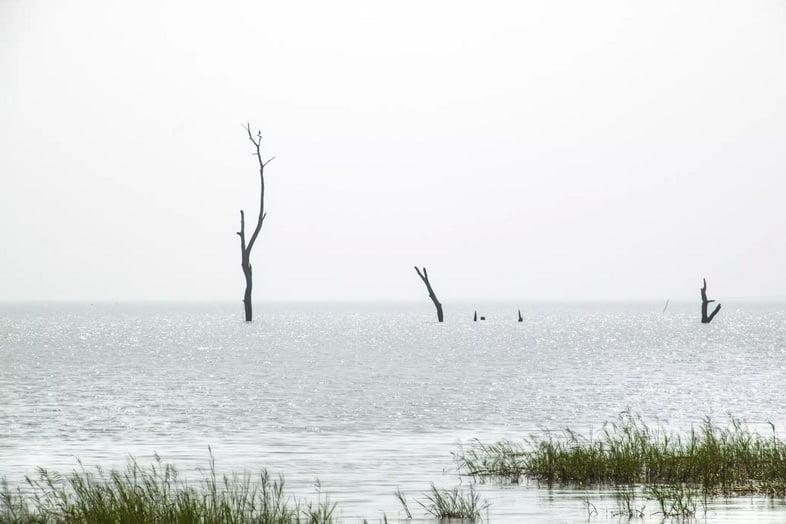 Мертвые ветви деревьев, поднимающиеся из озера.
