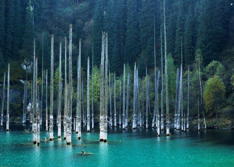 Высокие тонкие деревья, выходящие из голубых вод горного озера.