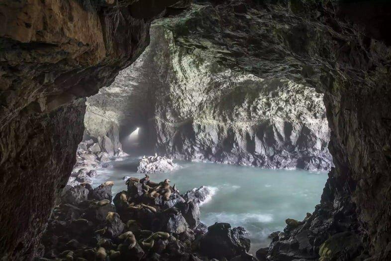 Морские львы лежат на скалах у входа в морскую пещеру