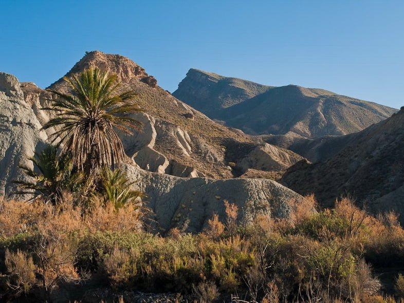 Засушливые горы с редкой растительностью и пальмы в солнечном зимнем пейзаже пустыни Табернас