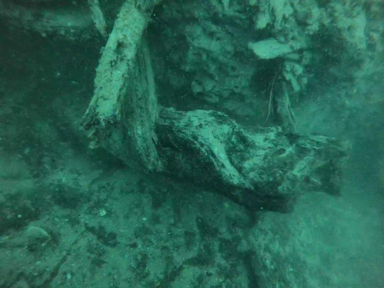Изображения из подводного леса в Алабаме
