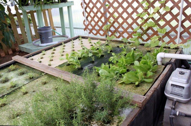 Саженцы, зелень, травы, выращенные в системе аквапоники