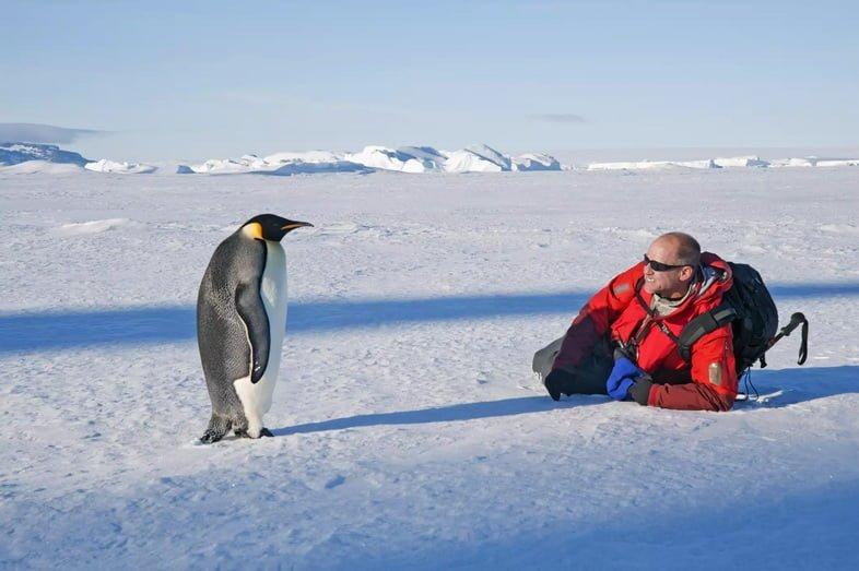 Человек, лежащий на боку на льду, рядом с неподвижно стоящим императорским пингвином
