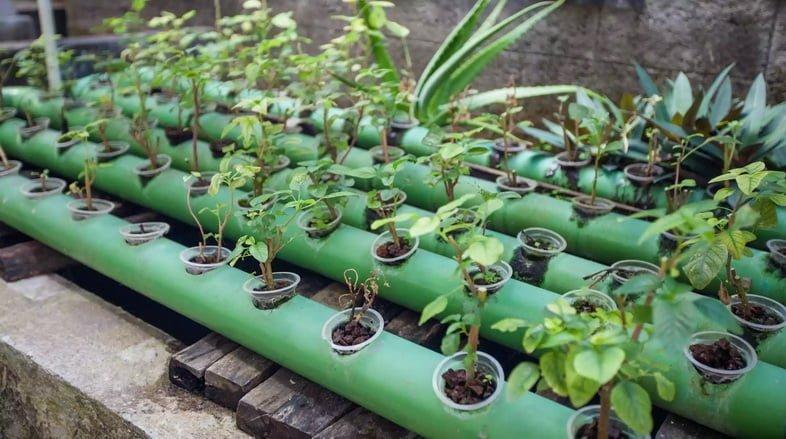 Растения аквапоники, растущие в трубах