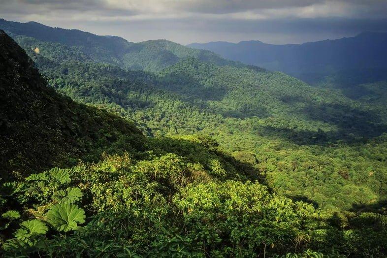 Облачный лес Монтеверде