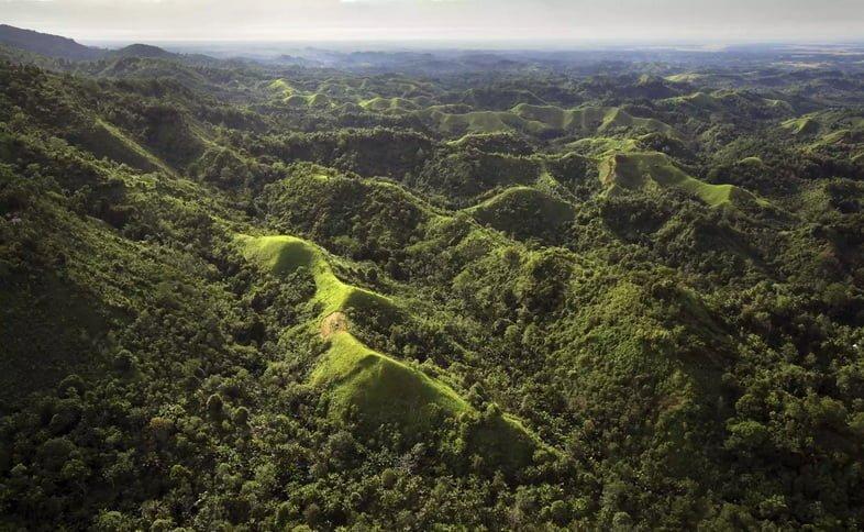 Тропический лес Новой Гвинеи