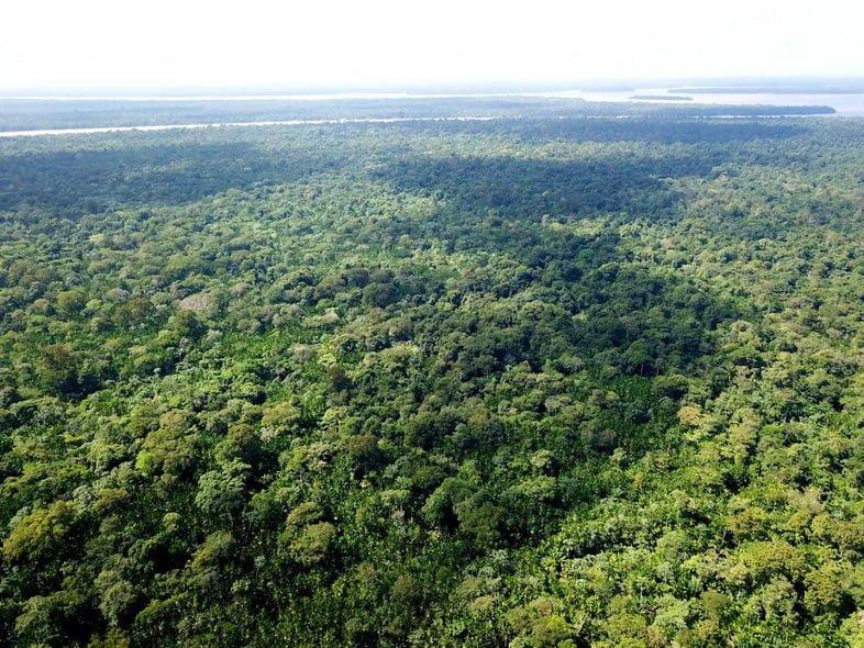 Аэрофотоснимок тропических лесов Амазонии