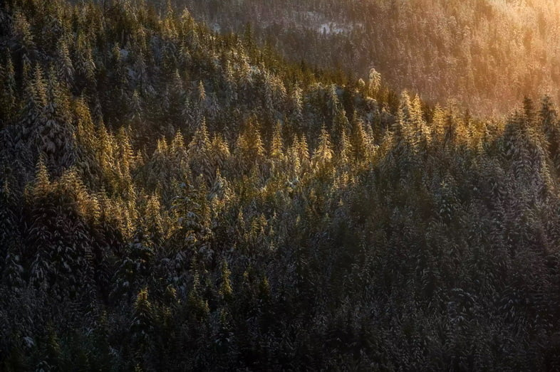 Национальный лес Тонгасс