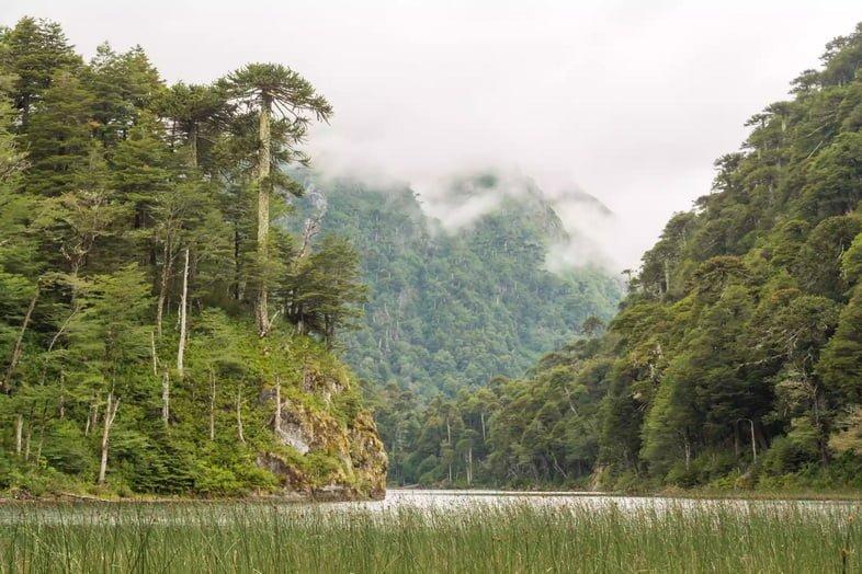 Вальдивские тропические леса, Чили