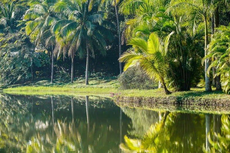 Тропический лес Сишуанбаньна