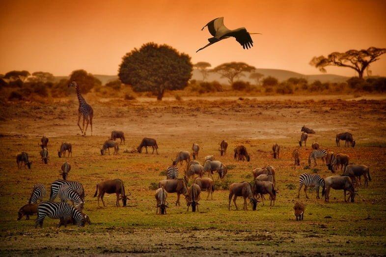 Разнообразие крупных животных на африканских лугах