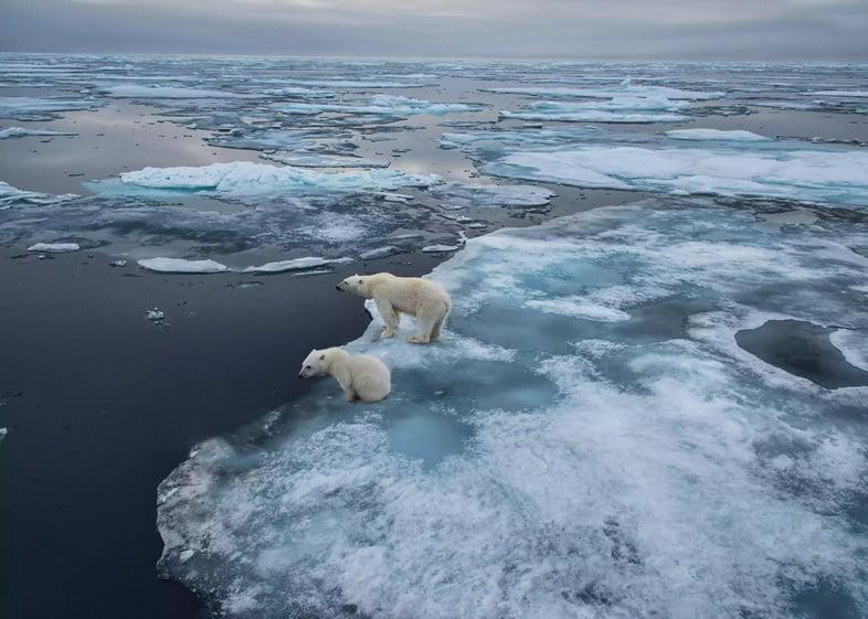 Охота белого медведя со льда на Шпицбергене