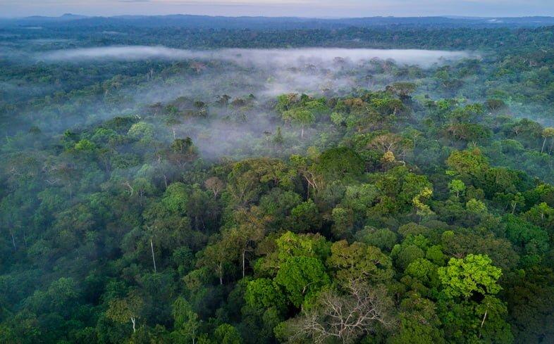 Тропический лес Амазонии в Бразилии