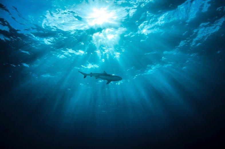 Силуэт акулы, видимый из-под воды, глядя на поверхность