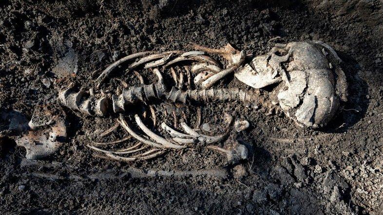 Одно из захоронений, найденных в гробницах в Швеции
