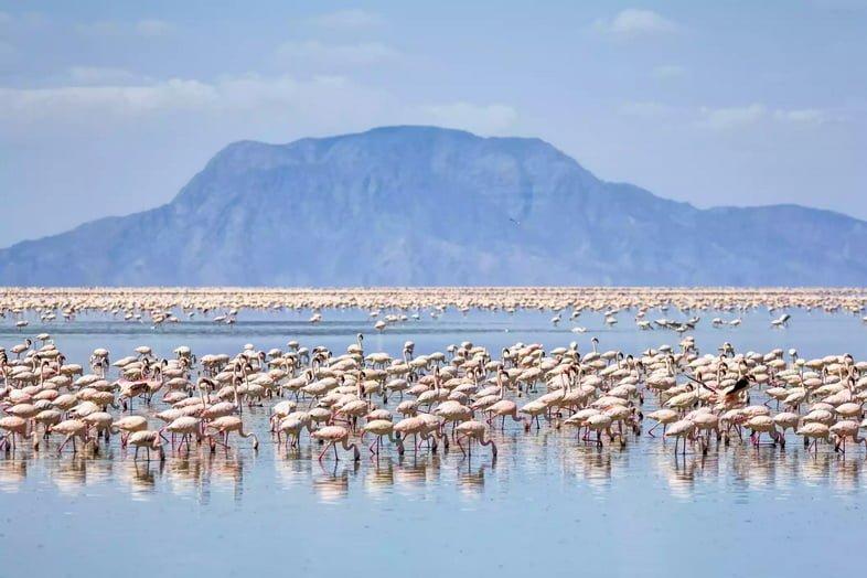 Фламинго в озере на фоне горы