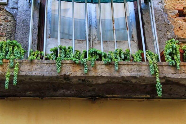 Балкон с очитком в горшках