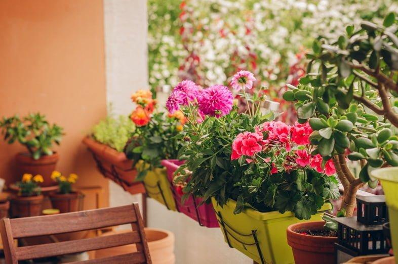 Разноцветные цветы, растущие в горшках на балконе