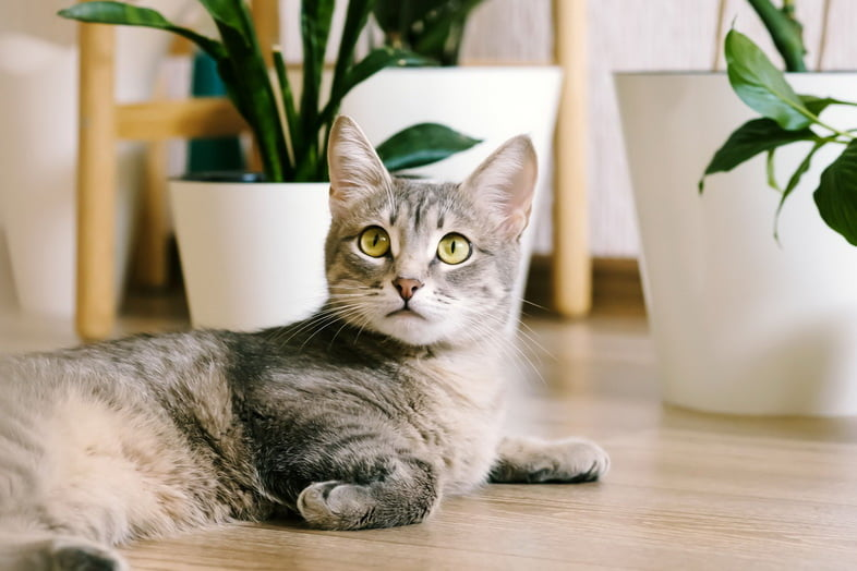 Кошка на полу среди комнатных растений