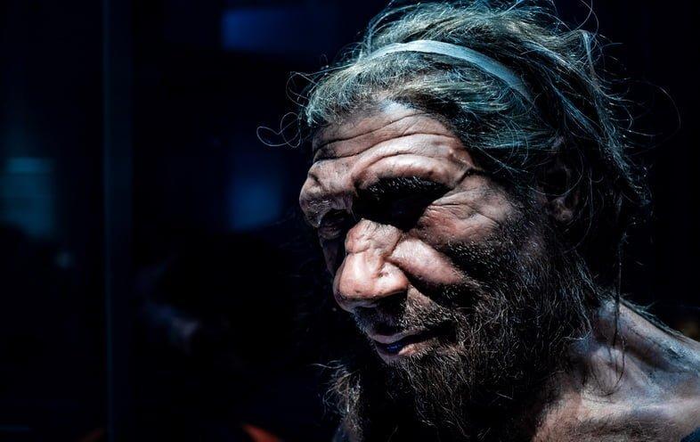 Копия фотографии мужчины-неандертальца в Музее естествознания в Лондоне